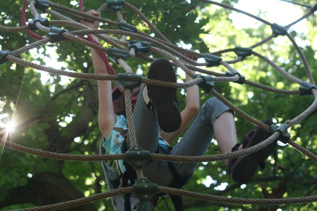 climbing-forest-906973_960_720